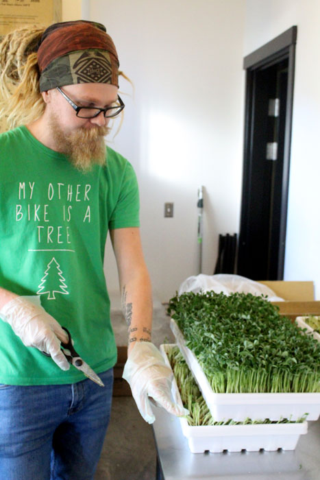 Jesse Erickson harvests and packages greens for delivery on Thursday, Oct. 10.